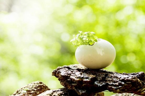 芽,夢実現,潜在意識