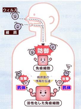 抗体の役割