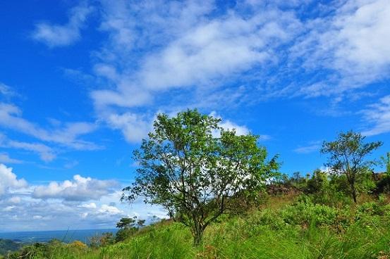 山頂木,優秀,潜在意識