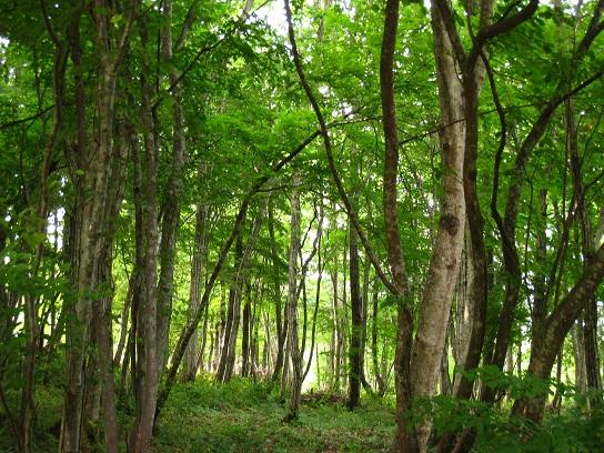 新緑の道 潜在意識