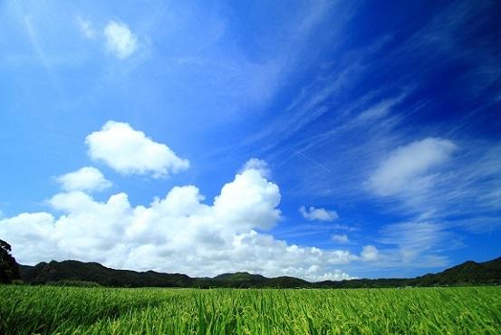 草原2 潜在意識