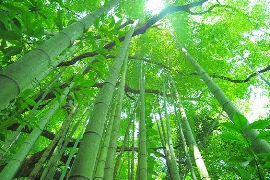 竹林 潜在意識